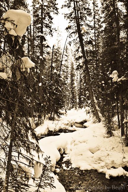 Cross Country Skiing-4