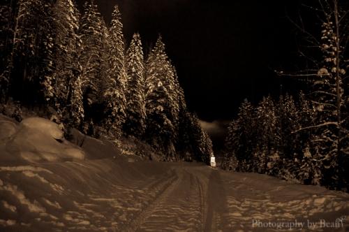 Field by Night-13