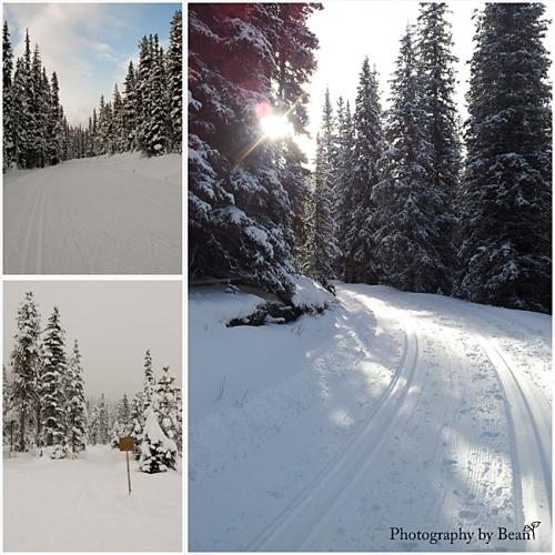 Skiing 2014_1